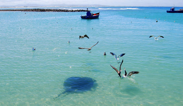 Parrie-the-stingray