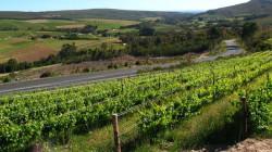 Elim Wine Route